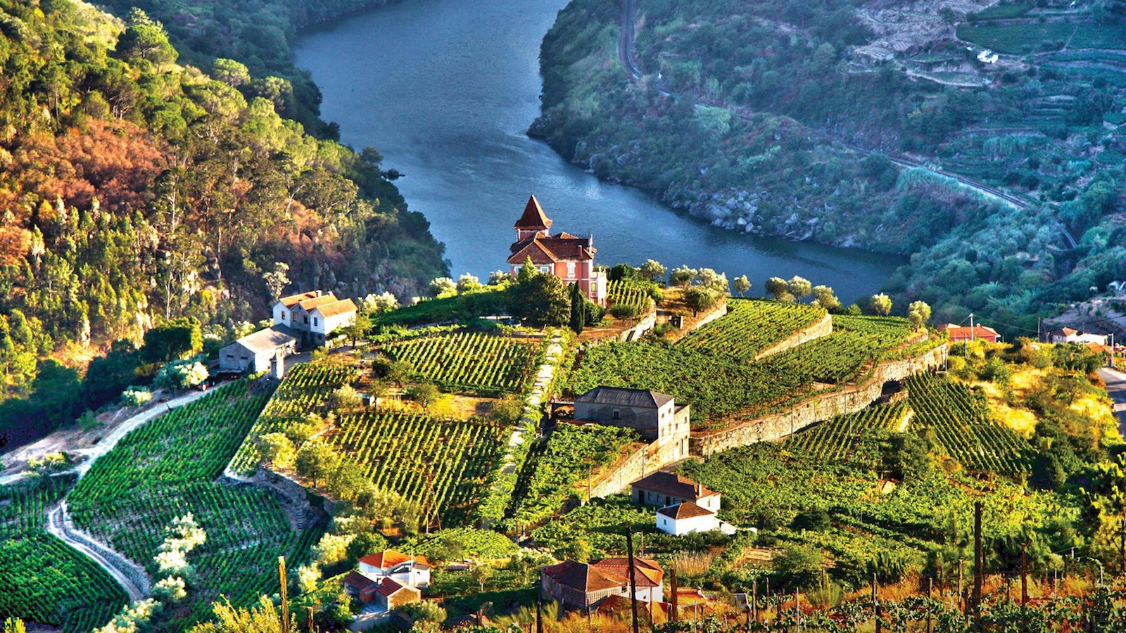 Aerial view of Douro region in Portugal