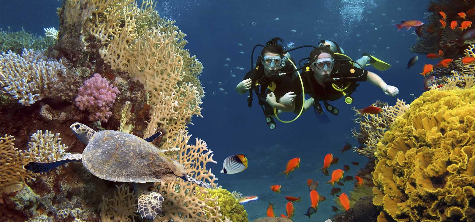 Scuba divers in Dominica Coral Reef.